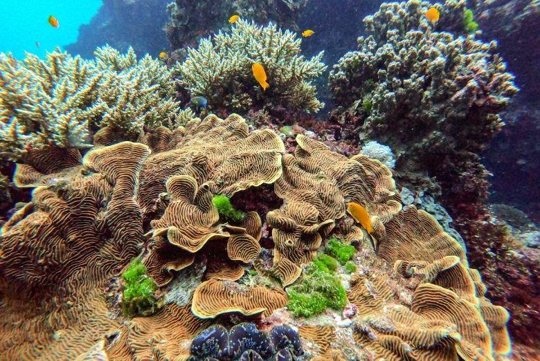 snorkeling in the great barrier reef
