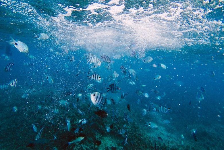 worlds best snorkeling
