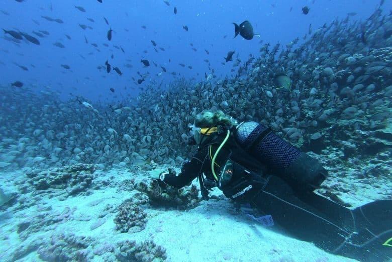 scuba diving in a school of fish