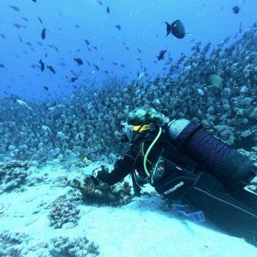 scuba diving wearing an air integrated dive computer